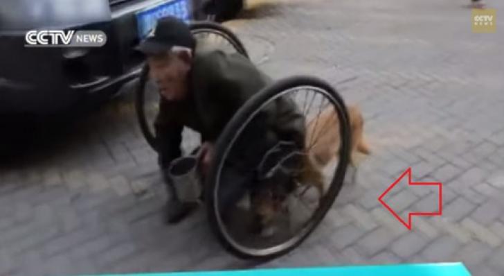 Un câine îşi plimbă stăpânul imobilizat în scaunul cu rotile. Povestea celor doi, cutremurătoare!