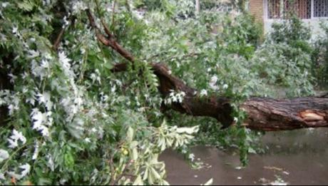 VIJELIA face prăpăd în Capitală: ploaie cu grindină şi copaci căzuţi în Bucureşti UPDATE
