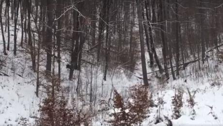 O scenă spectaculoasă filmată într-o pădure din România face valuri pe Facebook