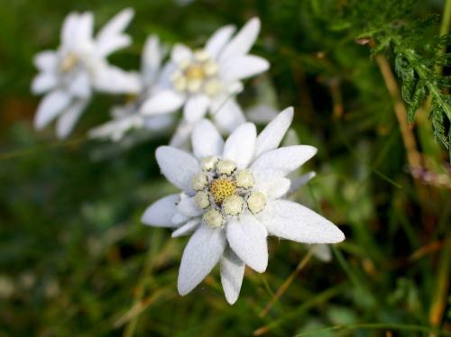 (w500) <p>Floarea