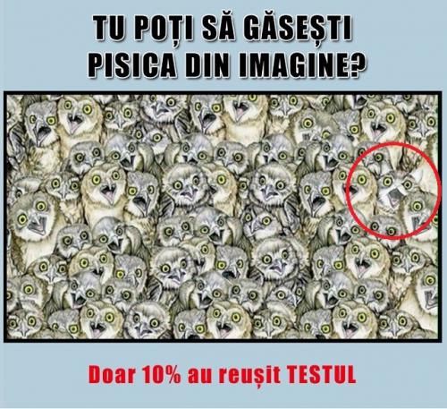 (w500) <p>Găseș