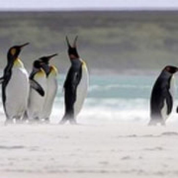 Fosilele unui pinguin gigant tropical au fost descoperite în Peru