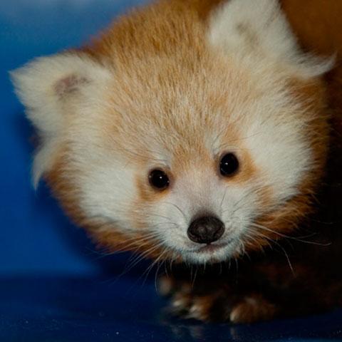 Foto: zooboise.org