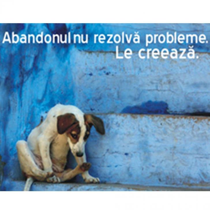 Foto: 4animals.ro