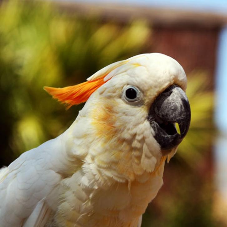 Foto: galileo-web.com