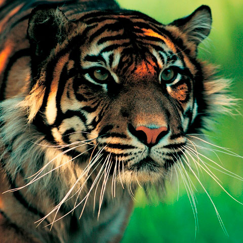 Foto: birdlife.org