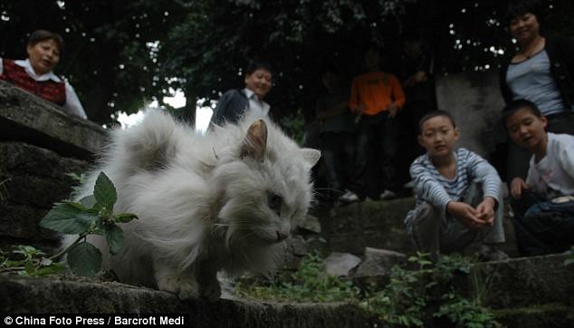 Foto: China Foto Press / Barcroft Media