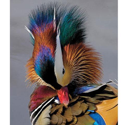 Foto: lesley-smitheringale-fine-art.com