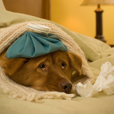 Foto: doggies.com