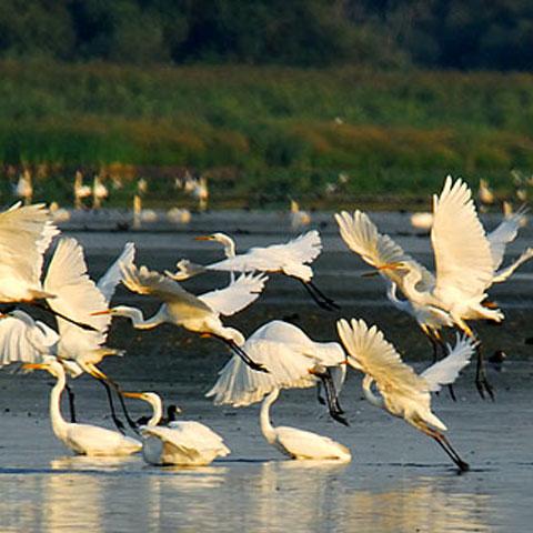 Foto: romeohuidu.com