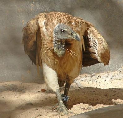 Foto: animalesextincion.es
