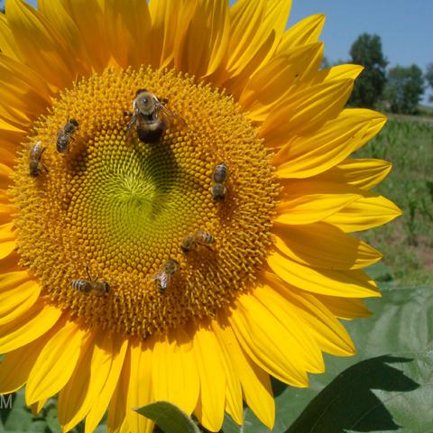 Foto: http://windwhisperer.files.wordpress.com/2008/08/august-2008-085.jpg