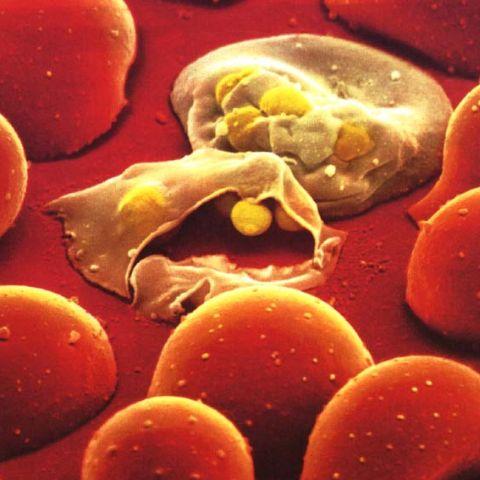 Foto: biology.ccsu.edu topnews.in