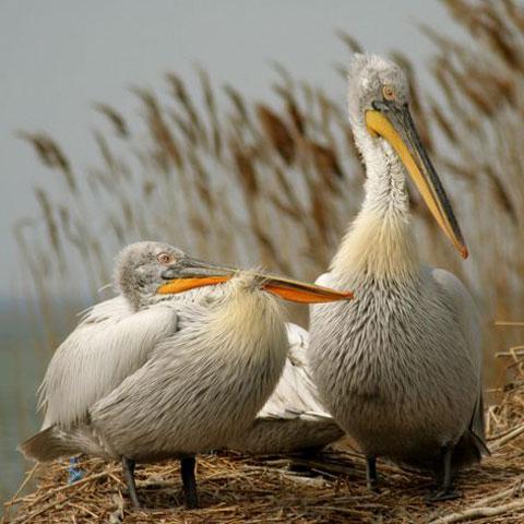 Foto: wordpress.com