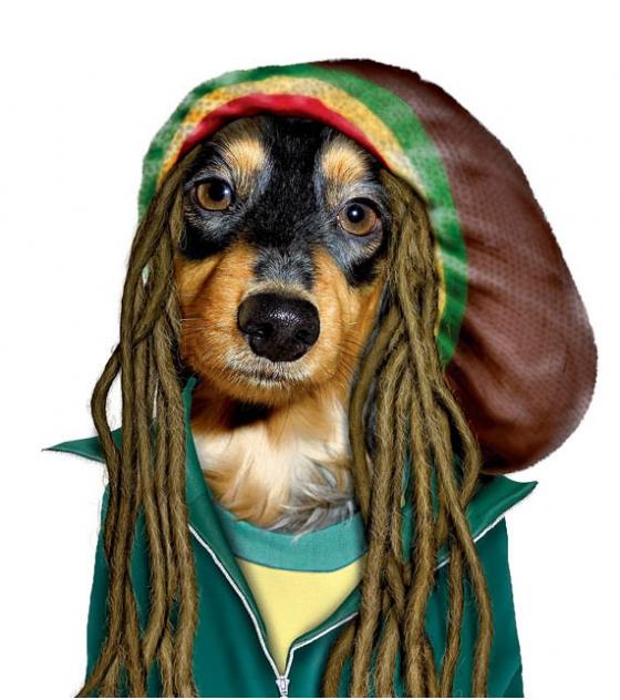 Foto: zigonet.com - Bob Marley