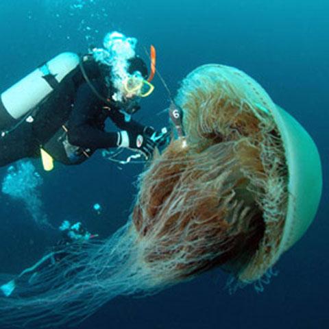Foto: cambreenotes.com