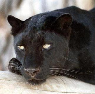 Foto: gaia.com