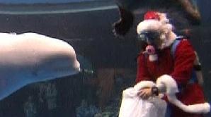 Balena şi Moş Crăciun
