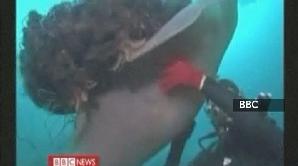 Meduze uriaşe în apele Japoniei
