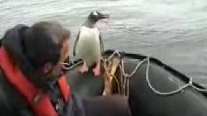 Pinguinul norocos