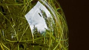 Plantele renunţă la agresivitate în preajma neamurilor