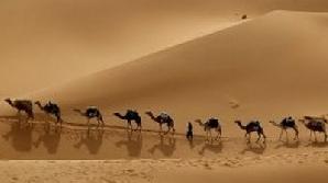 Australia vrea să scape de cămile