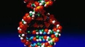 Schimbarea poziţie genei HES5 indică cancerul la sân