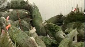 Brazii nevânduţi au fost abandonaţi în pieţe/Foto: Realitatea TV