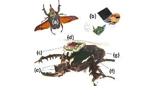 Schema echipării unui gândac telecomandat