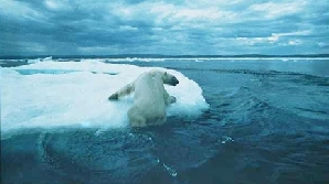 Urs polar neajutorat
