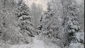 Meteorologii anunţă ninsori în cea mai mare parte a ţării