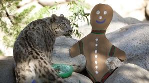 Cadoul pentru leoparzi