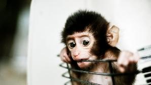 Maimuţa va trebui să îşi aline singurătatea în spaţiu alături de un robot.