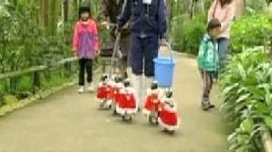 Pingunii dintr-un parc acvatic din Japonia au primit costume speciale de Crăciun