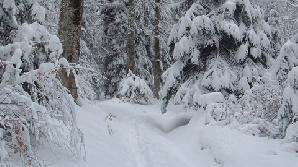 Drum plin de zăpadă