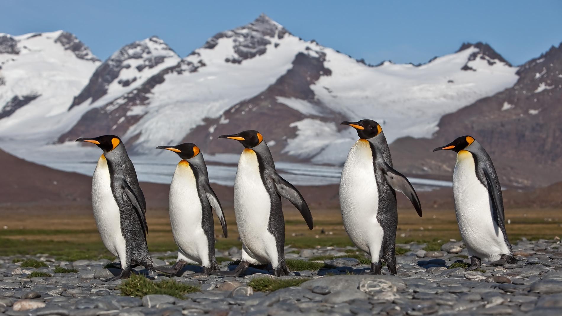 Antarctica - Roger Mantu