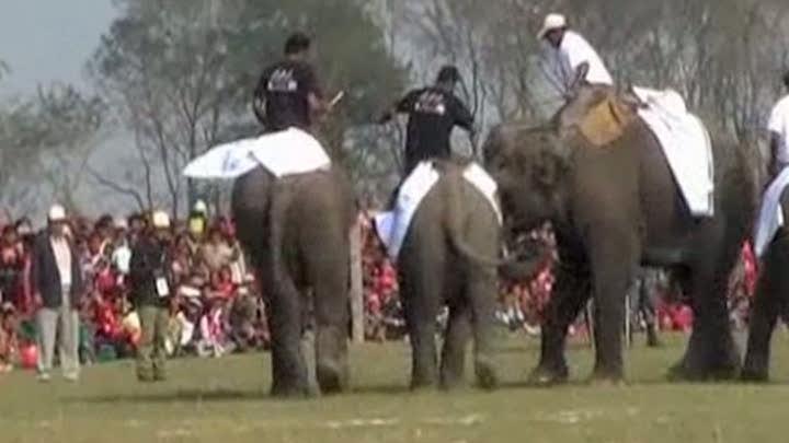 Elefanţii joacă fotbal în Katmandu