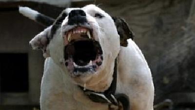 Luptă ilegală câini Bistrița-Năsăud