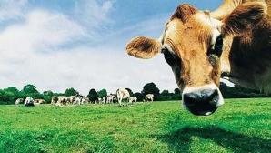 Agricultura moare rapid şi sigur: Peste 25.000 de fermieri au fost nimiciţi de criză