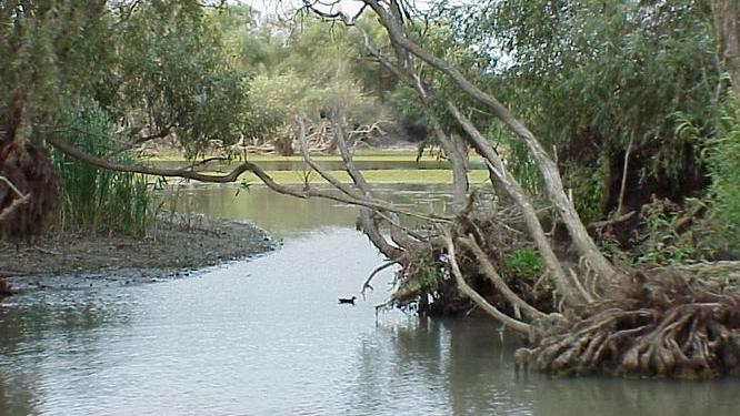 Delta Dunarii / FOTO: wikipedia.org