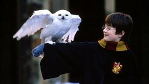 Harry Potter şi bufniţa sa, Hedwig / FOTO: lauraerickson.com