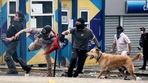 Câinele Loukanikos, în mijlocul protestelor de ani de zile / FOTO: Alkis Konstantinidis / The Associated Press