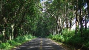 Perdea forestieră lângă drumurile naţionale, împotriva înzăpezirii / FOTO: hawaiilifeofluxury.com