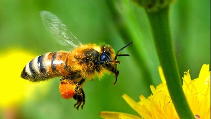 Un ieșean a murit după ce a fost înțepat de o albină. Foto/Arhivă