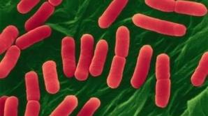 Infecţia cu E.coli a făcut 50 de victime