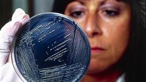 O nouă tulpină de salmonella rezistentă la antibiotice ameninţă să se răspândească în lume