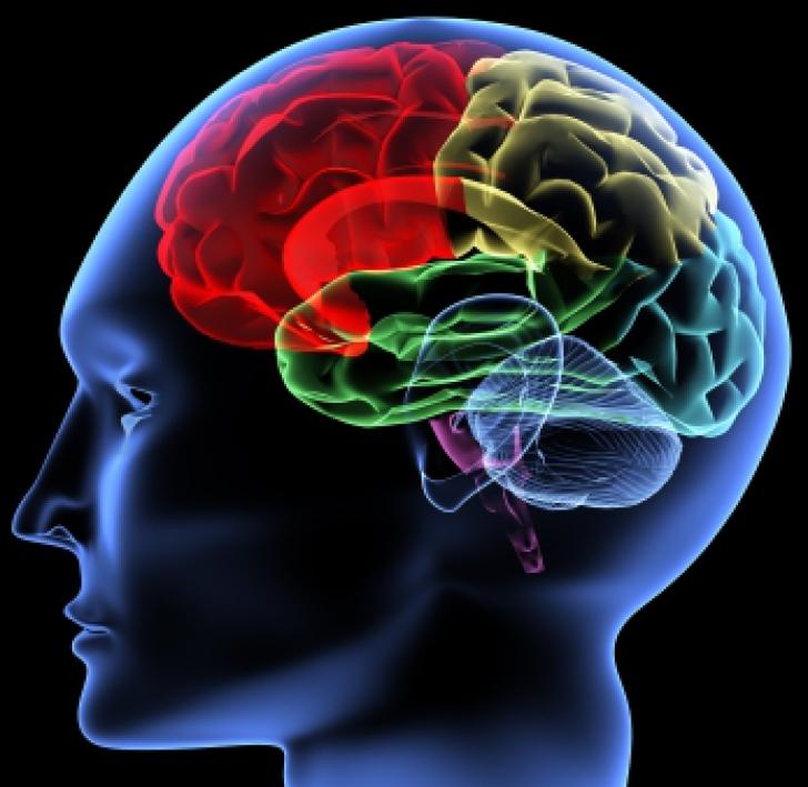 Descoperire ŞOCANTĂ despre creierul bărbaţilor! Ce se întâmplă după ce urmăresc filme pentru adulţi