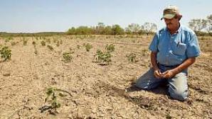 Ajutor pentru producatorii din sectorul vegetal afectati de seceta