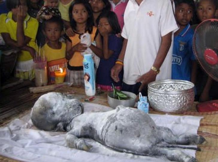 Creatura ciudata descoperita in Thailanda