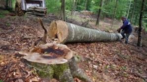 Bebeluş găsit abandonat la marginea unei păduri din Prahova